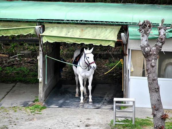 誘導馬の待機する馬房