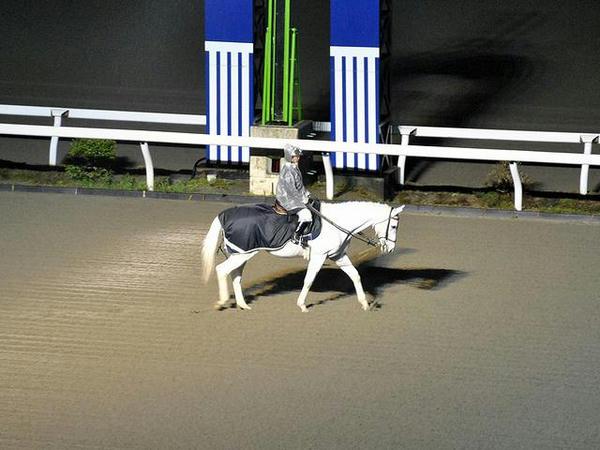 夜さ恋な誘導馬