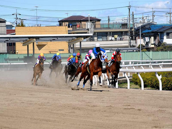 最終コーナーを走る競走馬