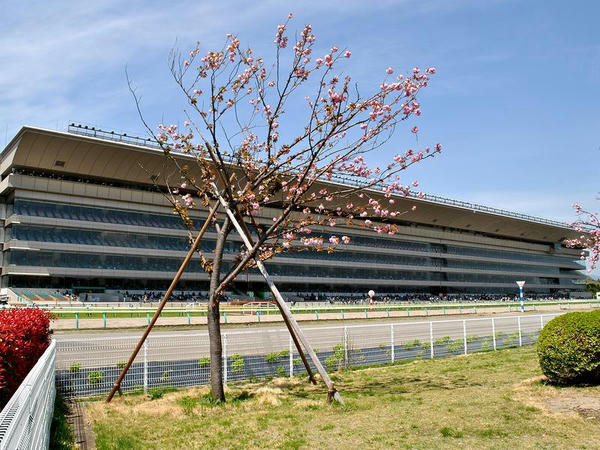 馬場内広場から見た福島競馬場のスタンド
