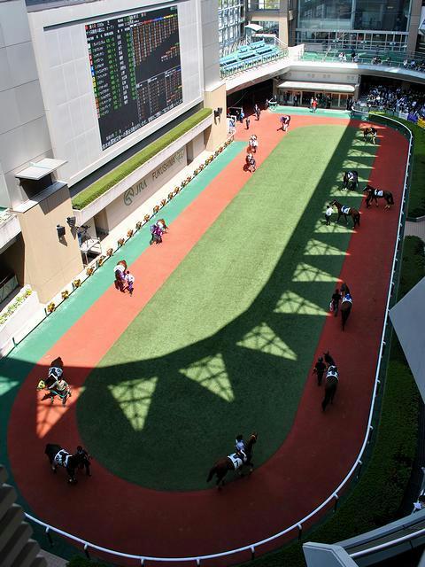 5階から見たパドック(第4レース)