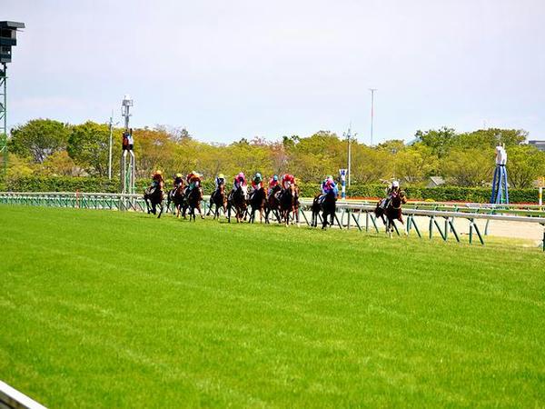 ホームストレッチを逆回りに走る競走馬