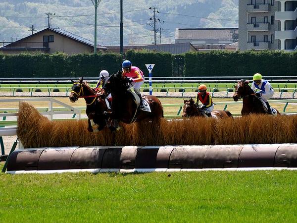 両面竹柵障害を順回りに飛ぶ競走馬