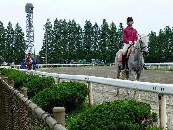 馬場入りする誘導馬と競走馬
