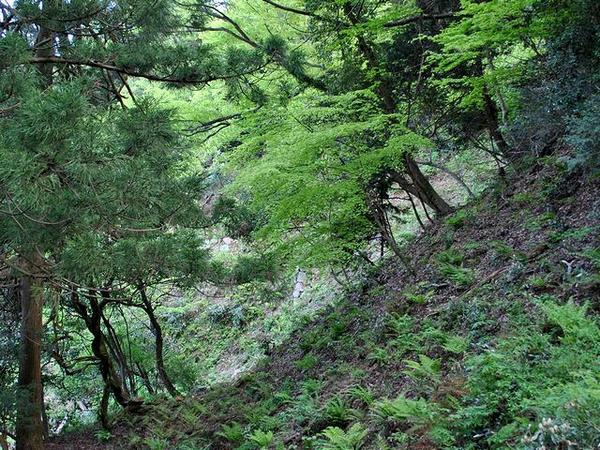 二の丸と三の丸の間の通路から見える石垣