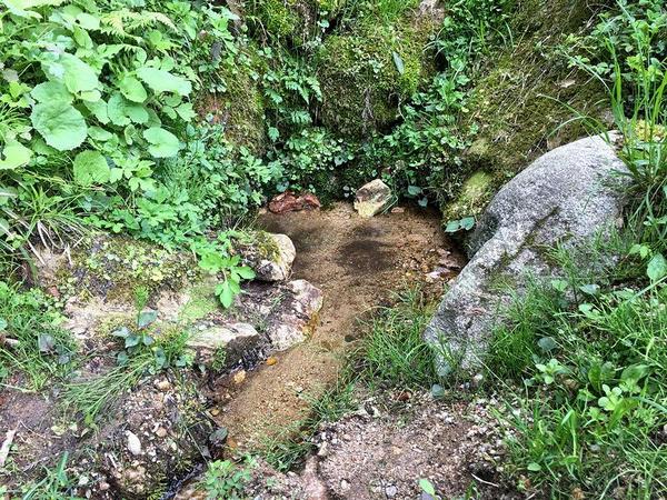 樋(とよ)の水