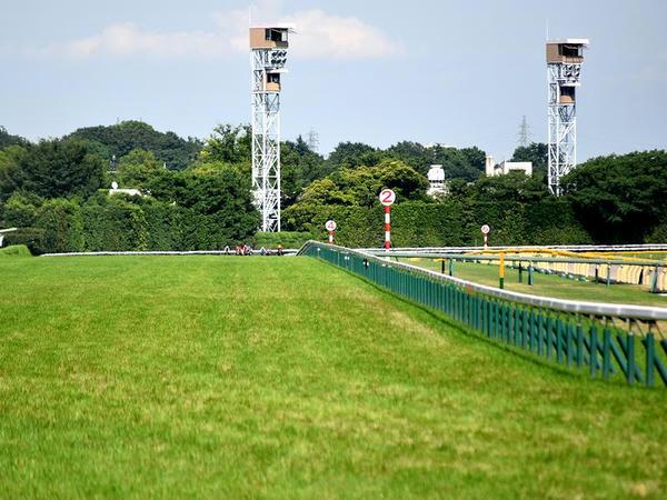 第9レースで最後の直線に入ったところ