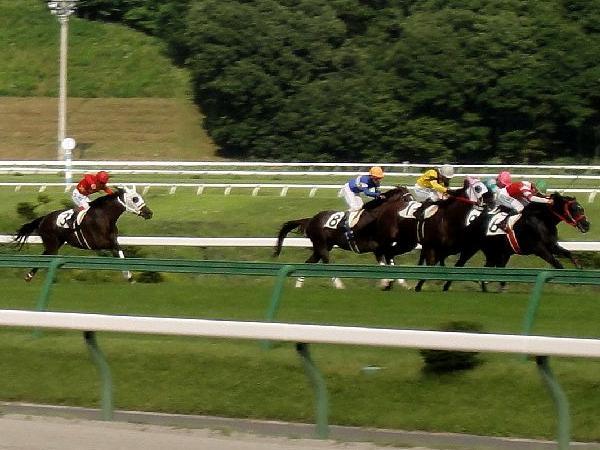 芝コースを疾走する競走馬
