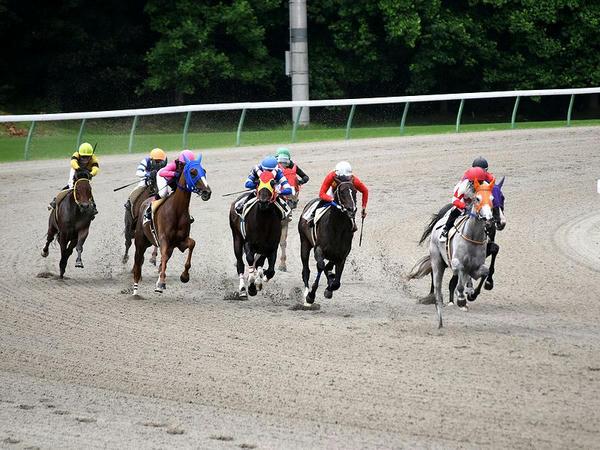 最終コーナーを回る競走馬