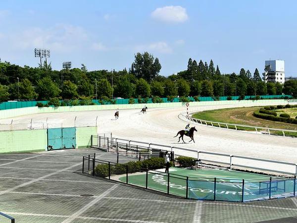 馬場入りする競走馬(第8レース)