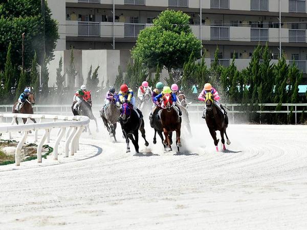 最終コーナーを回る競走馬(第2レース)