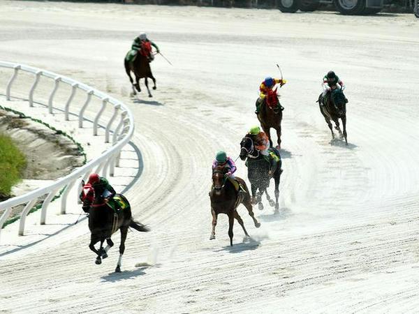最終コーナーを回る競走馬(第4レース)