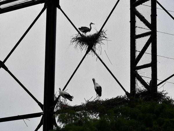 鳥の楽園の内部(3)