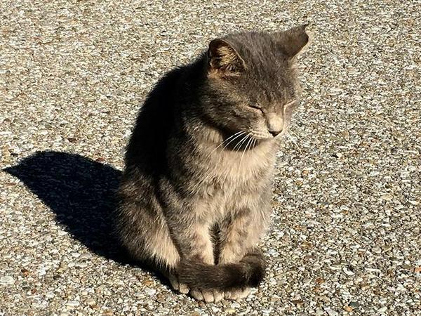 大手門付近にいらっしゃった猫さん