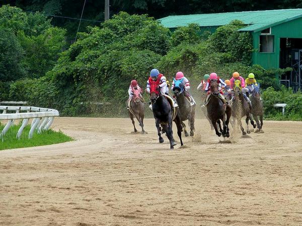 最終コーナーをまわる競走馬