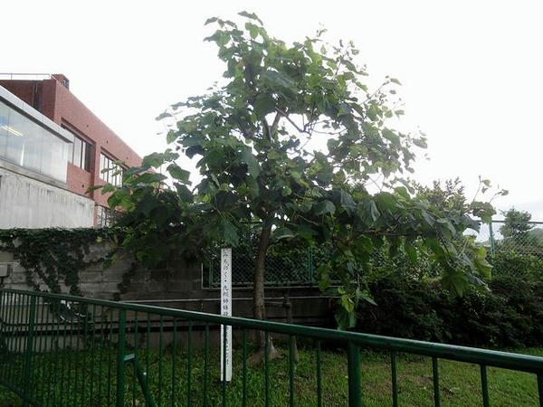 みちのく・九州姉妹競馬場提携記念植樹