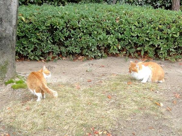 競馬場にいた猫さんたち