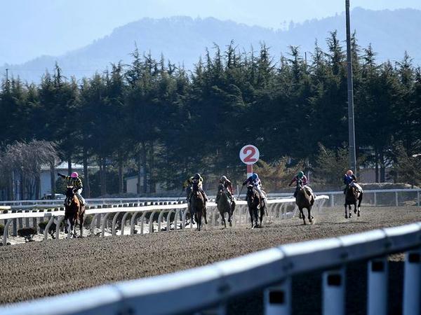 第2レースで最後の直線を走る競走馬