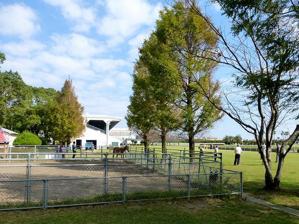 JRA宮崎育成牧場内の風景