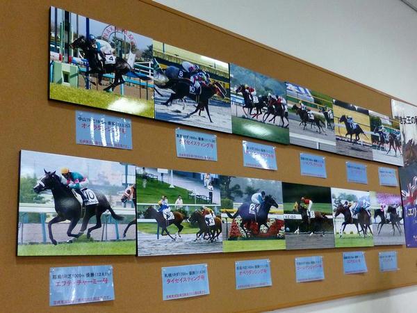 宮崎育成牧場で育成された競走馬の写真
