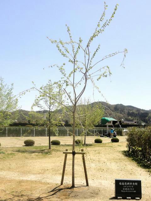 震災復興祈念樹