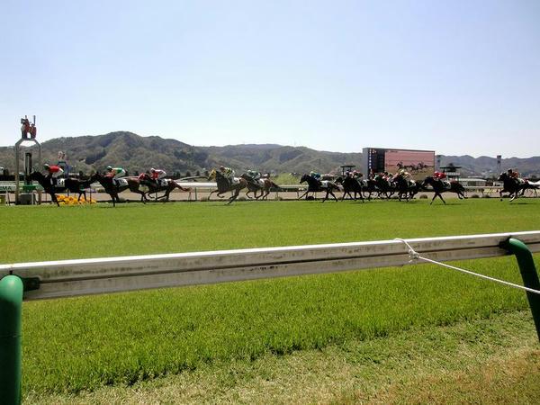 芝コースを走る競走馬