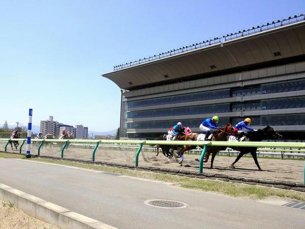 ダートコースを走る競走馬