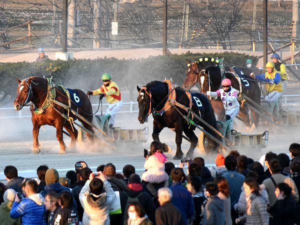 第49回ばんえい記念のレース中、このレース限りで引退するキタノタイショウ号(6番)、優勝したオレノココロ号(8番)など