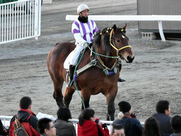 阿部武臣騎手を背にパドックを周回するトレジャーハンター号