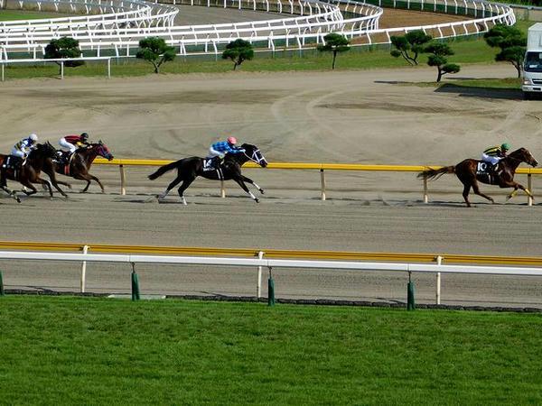 最後の直線で他馬を突き放すドラゴンゲート号と戸崎圭太騎手