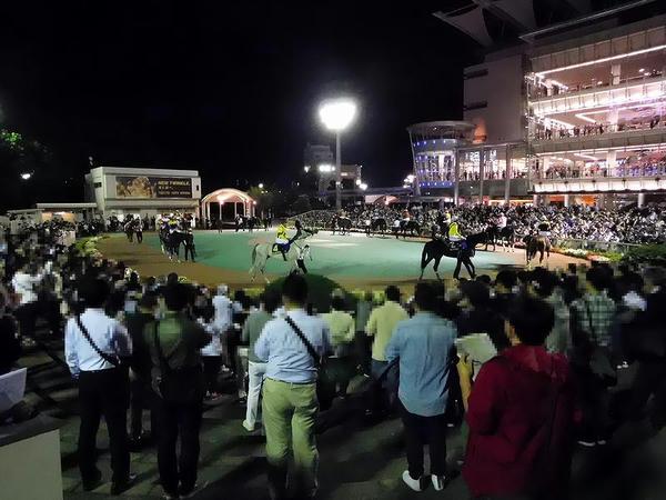 第51回東京盃のパドック