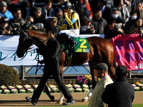 パドックを周回する荻野極騎手とフリージングレイン号
