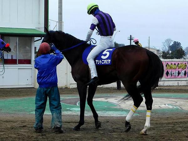 (5)アントニオピサ号に騎乗する菅原辰徳騎手