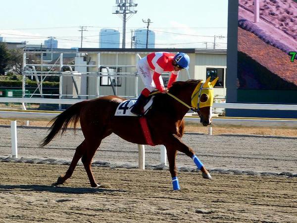 第5レースの返し馬