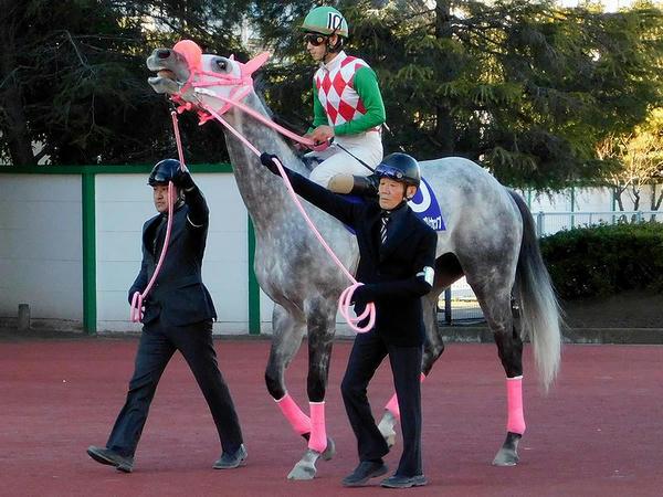 3番人気の(10)リッカルド号と矢野貴之騎手