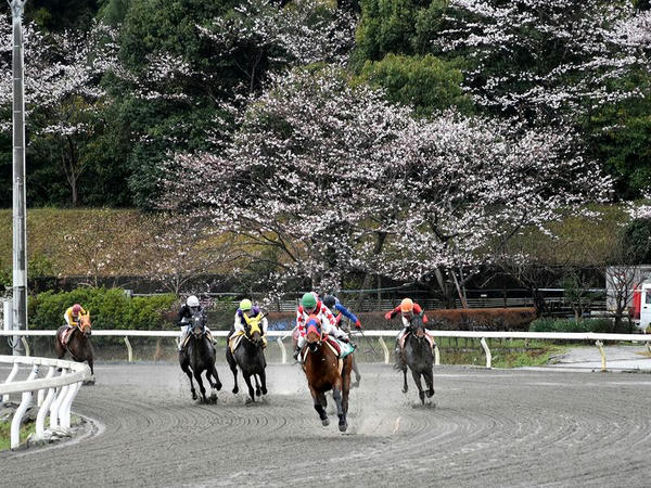 第1レースの最終コーナーと桜の花