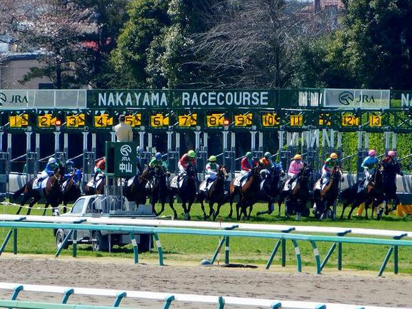馬場内広場から撮った第4レースのスタート