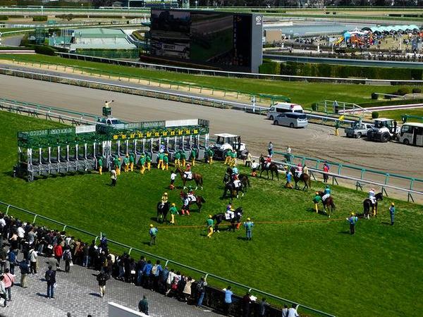屋外観覧席から撮った第5レース(芝1800m)のスタート前