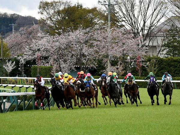 桜と最終コーナーを回る競走馬