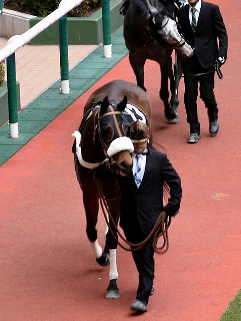5番人気の(13)エリシェヴァ号(津村明秀騎手)