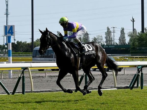 返し馬に入る(10)ダイメイプリンセス号と秋山真一郎騎手