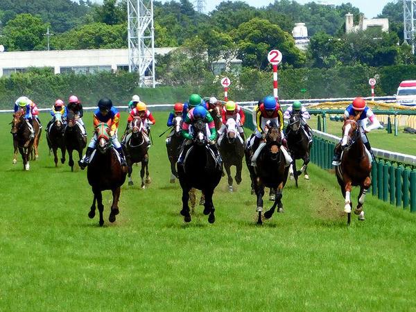 勝ったのは石川裕紀人騎手鞍上の(4)レノーア号(外目の黒い帽子)