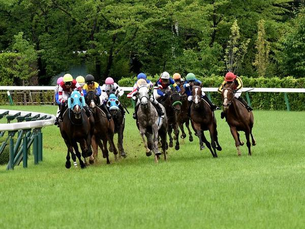 最終コーナーを回る各馬(1)