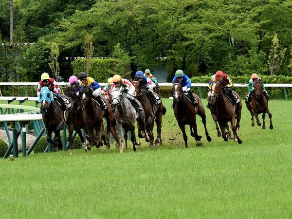 最終コーナーを回る各馬(2)