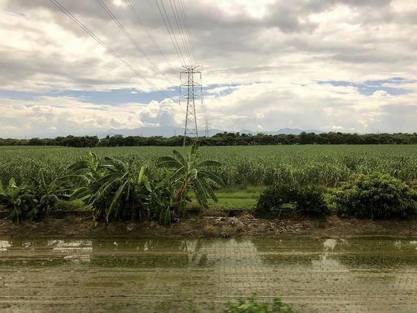 車窓から見た水田とバナナ、サトウキビ畑