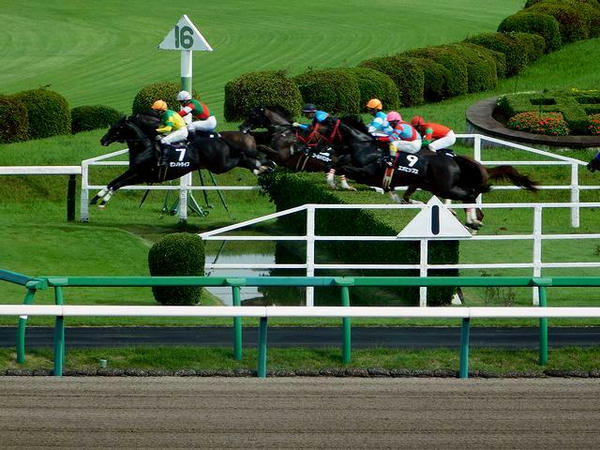 1号障害を飛越する各馬
