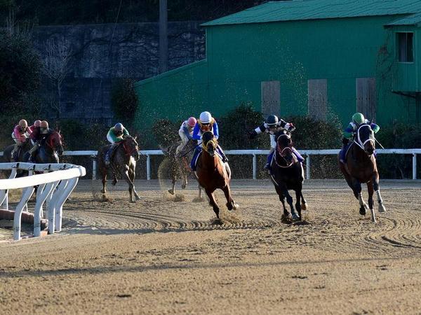 佐賀記念で最終コーナーを回る競走馬