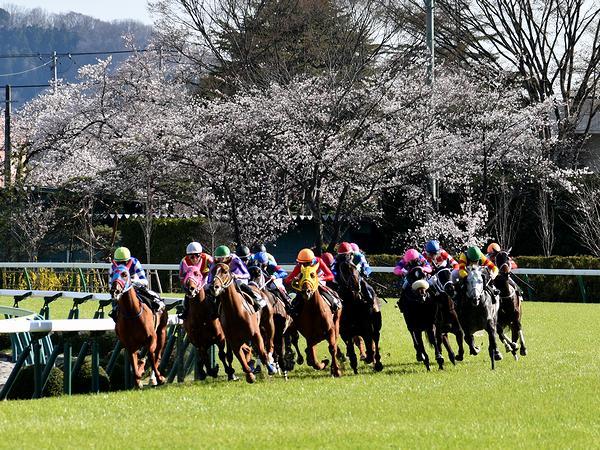 桜と競走馬