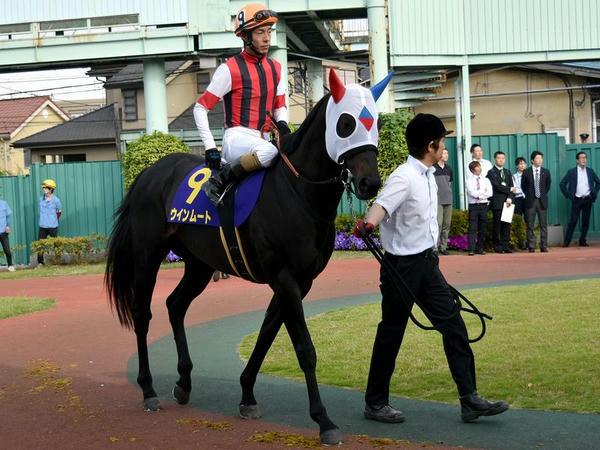 4番人気の(9)ウインムート号(JRA、牡6歳、JRA和田竜二騎手)