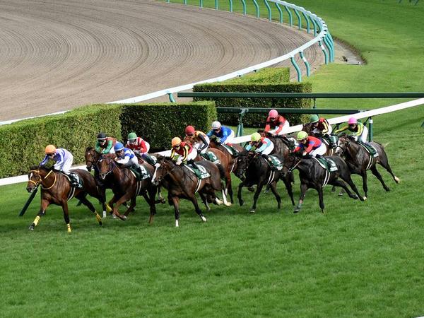 最終コーナーを立ち上がる各馬